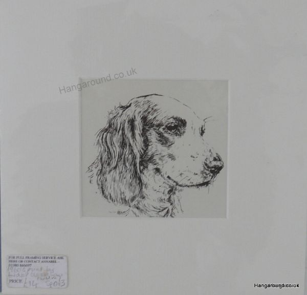 Welsh Spaniel - head  1960's print by Bridget Olerenshaw